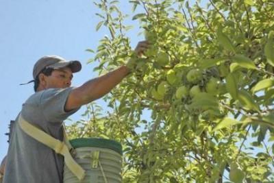 Trabajadores de la fruta
